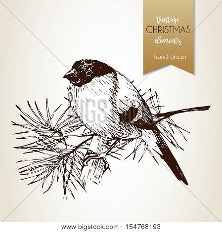 Vector hand drawn illustartion of bullfinch bird. Vintage engraved style. Isolated on grunge background. Christmas decoration. Use for seasonal greeting party decor holiday advertisement.