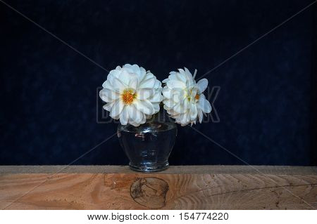 Still life with white flowers in a glass vase. Dark blue background.