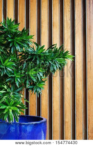 Hotel Lobby With Green Plant