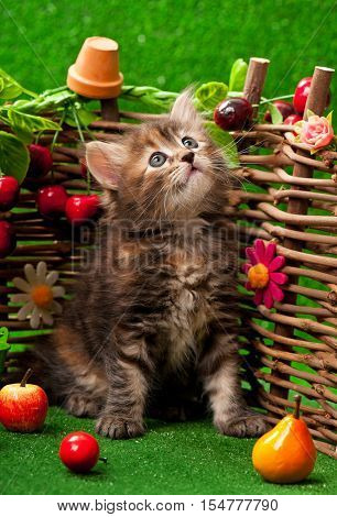 Cute little kitten sitting on the bright artificial grass over decorative wattle fence background