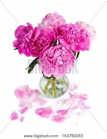 pink peony in glass vase . Nature .