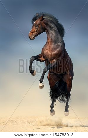 Beautiful stallion with long mane rearing up in desert dust against dark storm sky