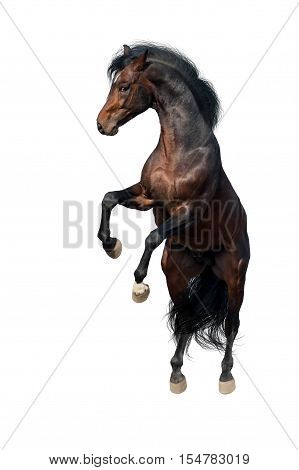 Bay horse rearing up and jump isolated on white background