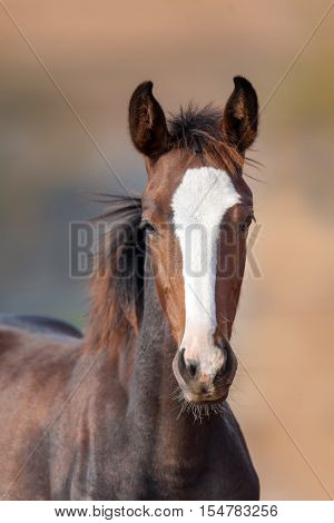 Beautiful colt portrait outdoor on light background
