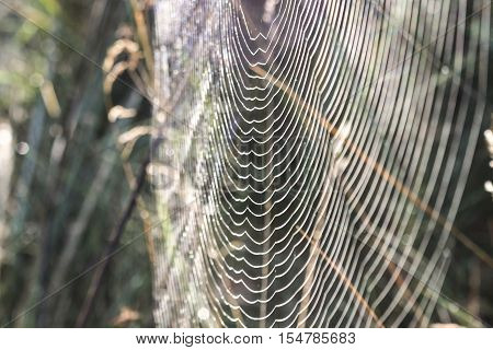 Web, cobweb, spiderweb, net, tissue, spider's web.The spider's web at dawn in the forest.