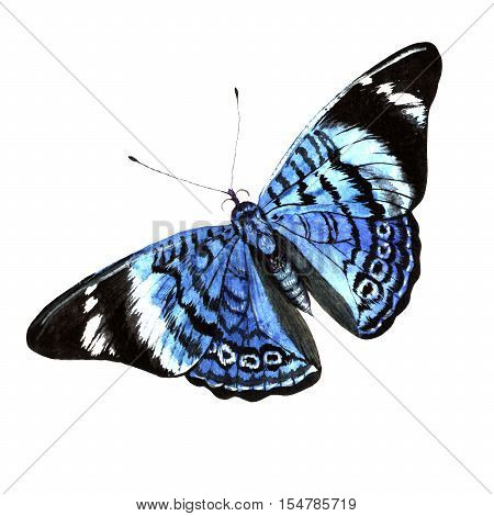 Blue butterfly in a watercolor style isolated. Aquarelle butterfly for background, texture, wrapper pattern, frame or border.