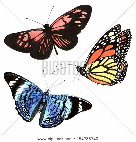 Butterflies set in a watercolor style isolated. Aquarelle butterflies for background, texture, wrapper pattern, frame or border.