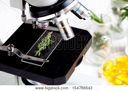 test food herbs samples on microscope slide in laboratory close up