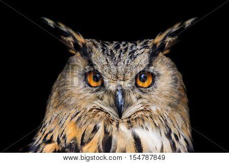 Portrait of eagle owl on black background