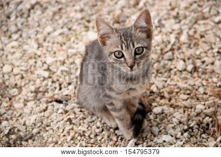 Portrait of stray kitten on the unfocused background