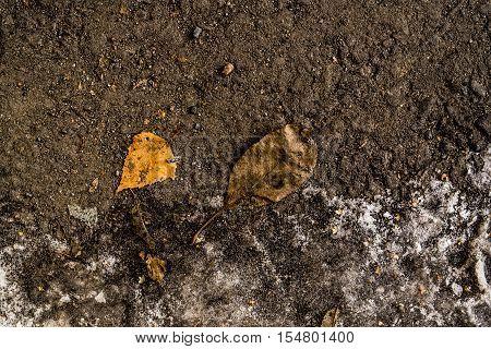 Yellow leaves on the asphalt, autumn, colors of autumn, fall, autumn pattern, autumn background, yellow leaves, autumn texture, fall back, autumn back, hello autumn grunge autumn background, ice, snow, early winter