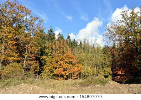 Undergrowth and forest with autumn colors with a small path
