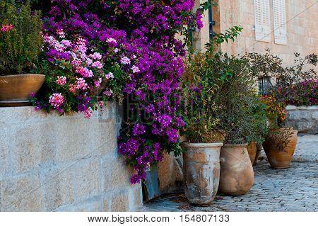 flower in ceramic pots. Yemin Moshe district, Jerusalem, Israel