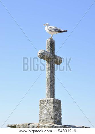Seagull on stone cross in Bayona Galicia Spain.
