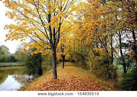 a walk around a pond in autumn