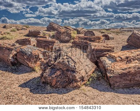 Petrified Forest near Holbrook Arizona in USA