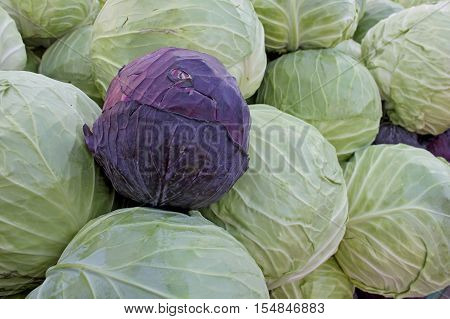 Green and red cabbage on the market in Bulgaria