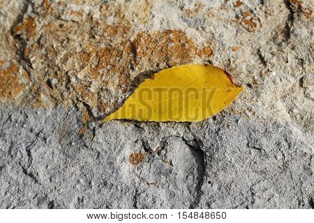 Yellow fall leaf resting on concrete rock like surface