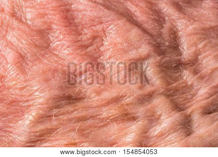 Macro Photo Of Back Of Old Mans Hand