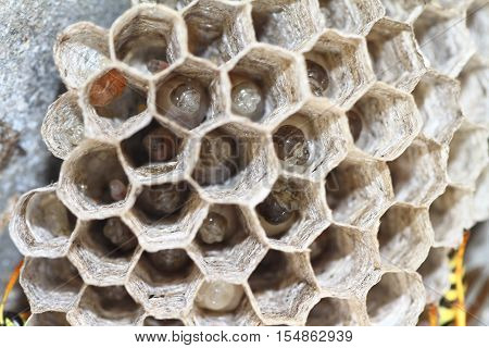 A closeup of a wasp's nest and three wasps