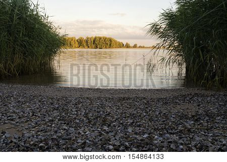 Beach filled with shells along the river Merwede near the Dutch village Hardinxveld-Giessendam