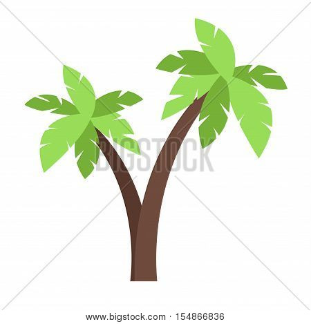 Green coconut palm icon isolated on white background. Palm icon isolated vector and green palm icon isolated. Isolated green summer tree plant nature and tropical palm isolated