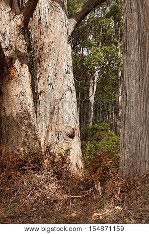 Stewarts Bay Tasmania