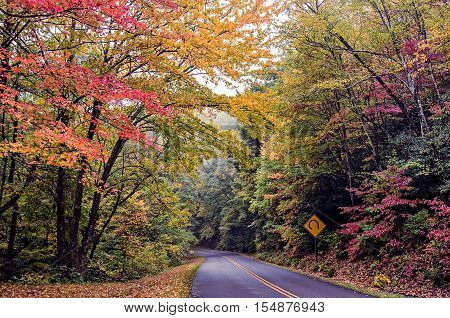 nature scenes on blue ridge parkway great smoky mountains