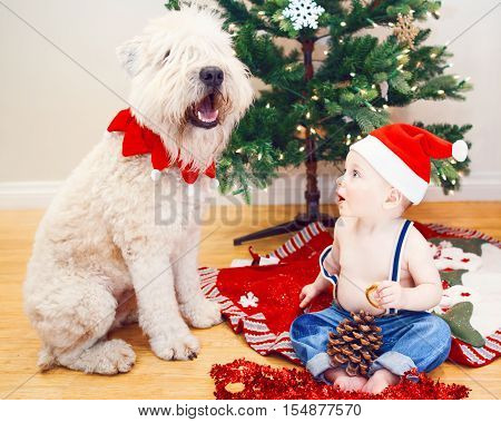 Candid lifestyle portrait of happy surprised funny white Caucasian baby boy in new year Christmas Santa hat sitting on floor indoor at home loking at large big pet dog