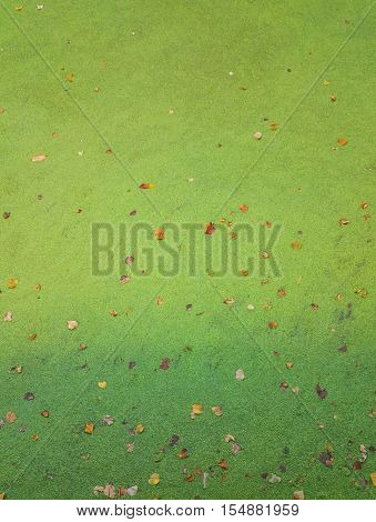 water with a layer of duckweed on the surface