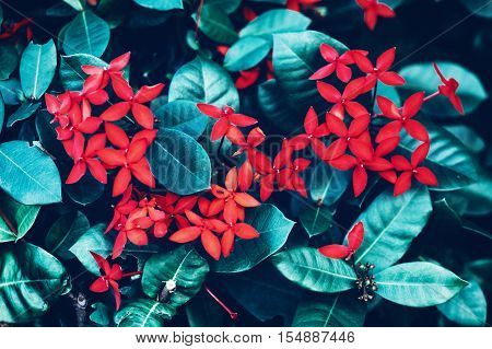 Beautiful fairy dreamy magic red small flowers with bright green cyan leaves background toned with filters in retro vintage color soft selective focus blurry background