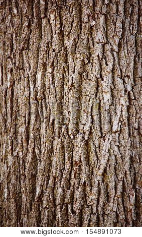 Closeup of texture background of an old oak tree bark