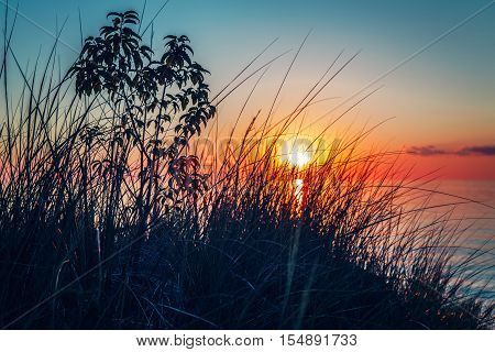 Beautiful evening sunset landscape at Canadian Ontario lake Huron in Pinery Park orange blue red sky sun view through grass low angle. Amazing summer sunset view on the beach