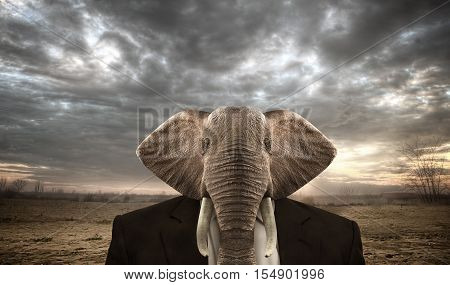 Elephant dressed in a businees suit on a african background.