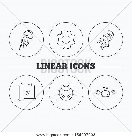Jellyfish, crab and ladybug icons. Ladybird linear sign. Flat cogwheel and calendar symbols. Linear icons in circle buttons. Vector