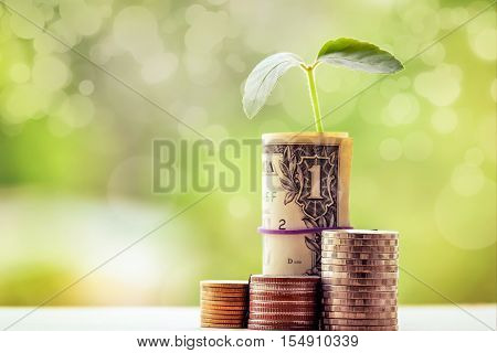 money exchange and money tree and financial