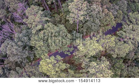 Beautiful panoramic photo over the tops of thick tree forest. Aerial view.