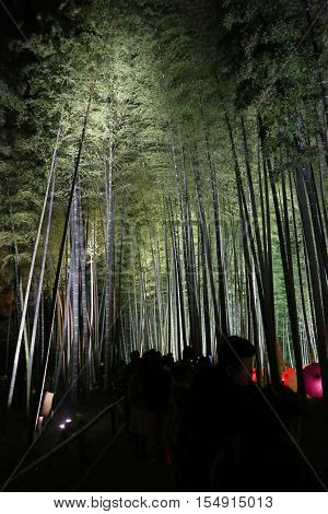 Fall Season Of Kodaiji Night  Bamboo Kyoto