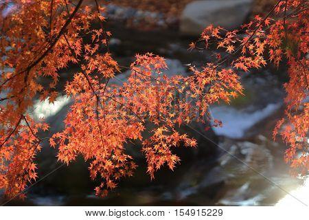 Fall. Autumn at Yasehiei zanguchi japan