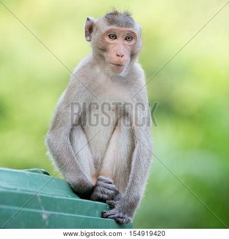portrait little monkey in the big zoo