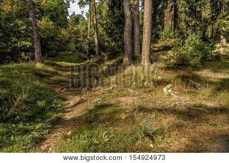 Nice Forest In Autumn