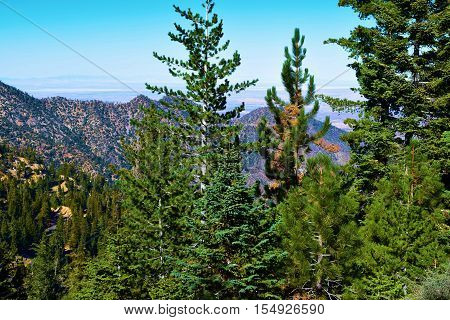 Lush green Pine Forest with the Mojave Desert beyond taken on a mountain ridge in the San Gabriel Mountains, CA