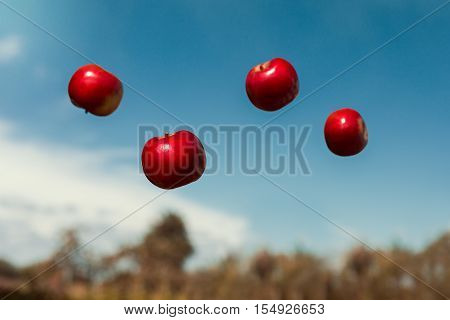 ripe apples in zero gravity thrown in the air. Autumn ripe apples, floating in zero gravity. Ripe fruits with vitamins.