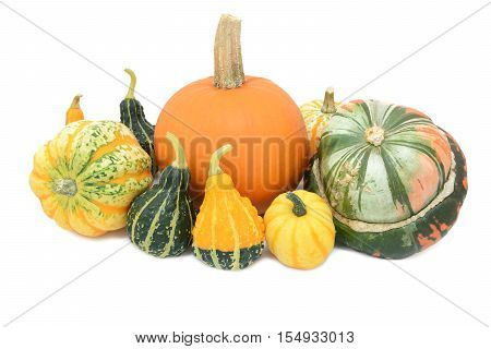 Group of cucurbits - pumpkin Festival squash Turks turban and ornamental gourds isolated on a white background