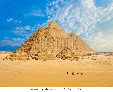 All Egypt Pyramids Camels Line Walking Wide Angle