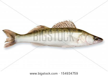 Fresh fish walleye close-up isolated on white background