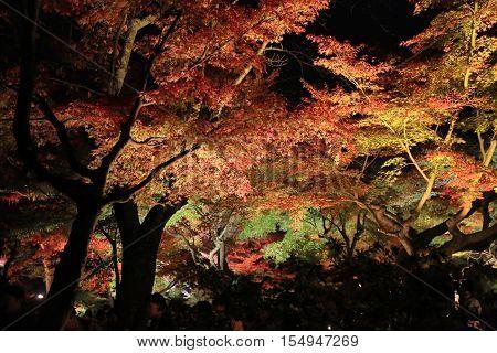 a fall season of kodaiji night at 2014