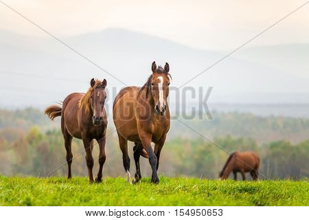 Mare and foal in a meadow in autumn