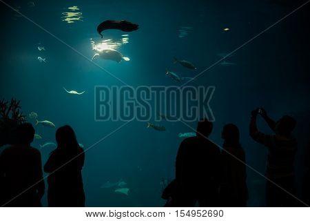 tourist watching with interest on big turtle in oceanarium tunnel
