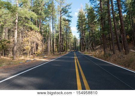 Highway through an evergreen forest south of Flagstaff Arizona